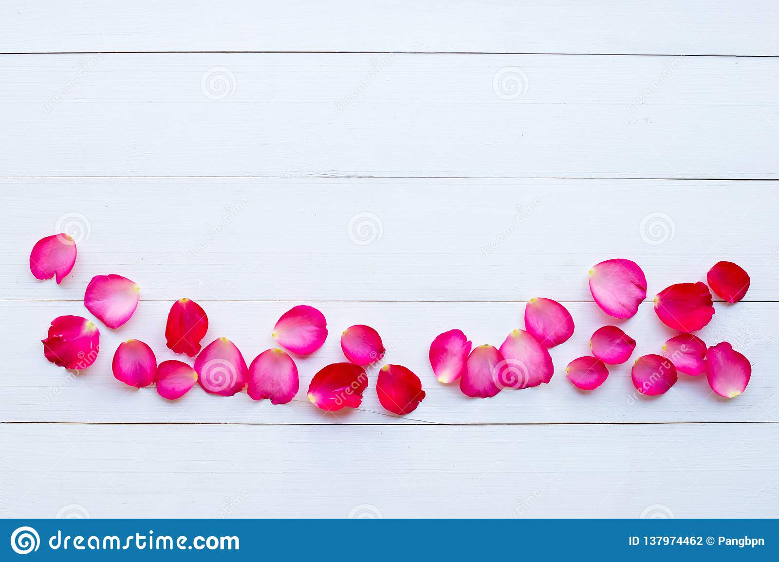 Rose petals on white wooden