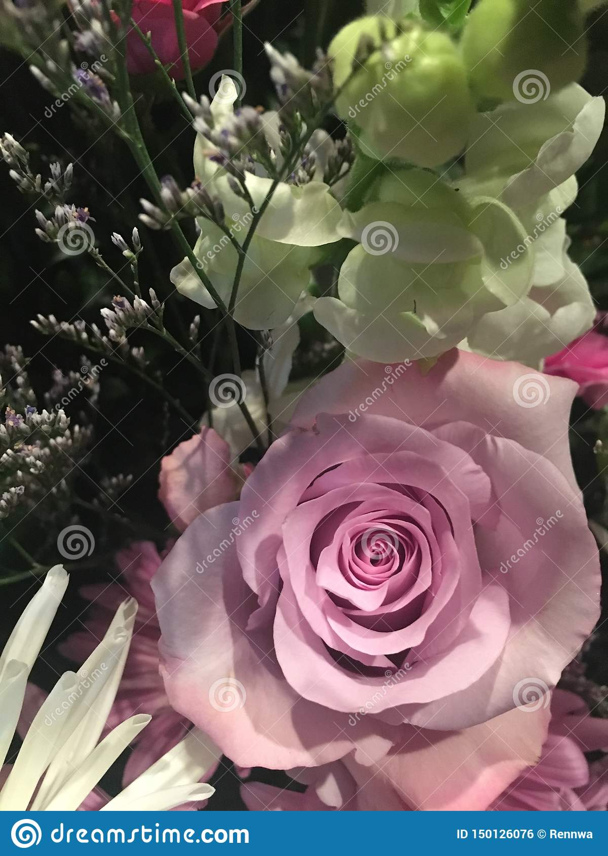 This Rose is Pink