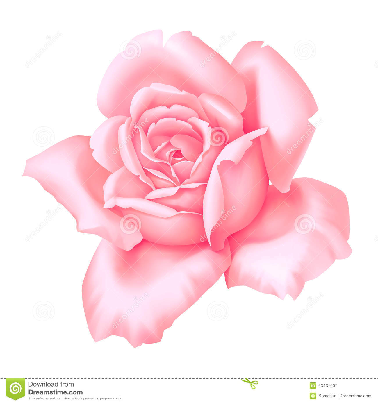 Rose Pink Flower Decorative Vintage Illustration Isolated On White