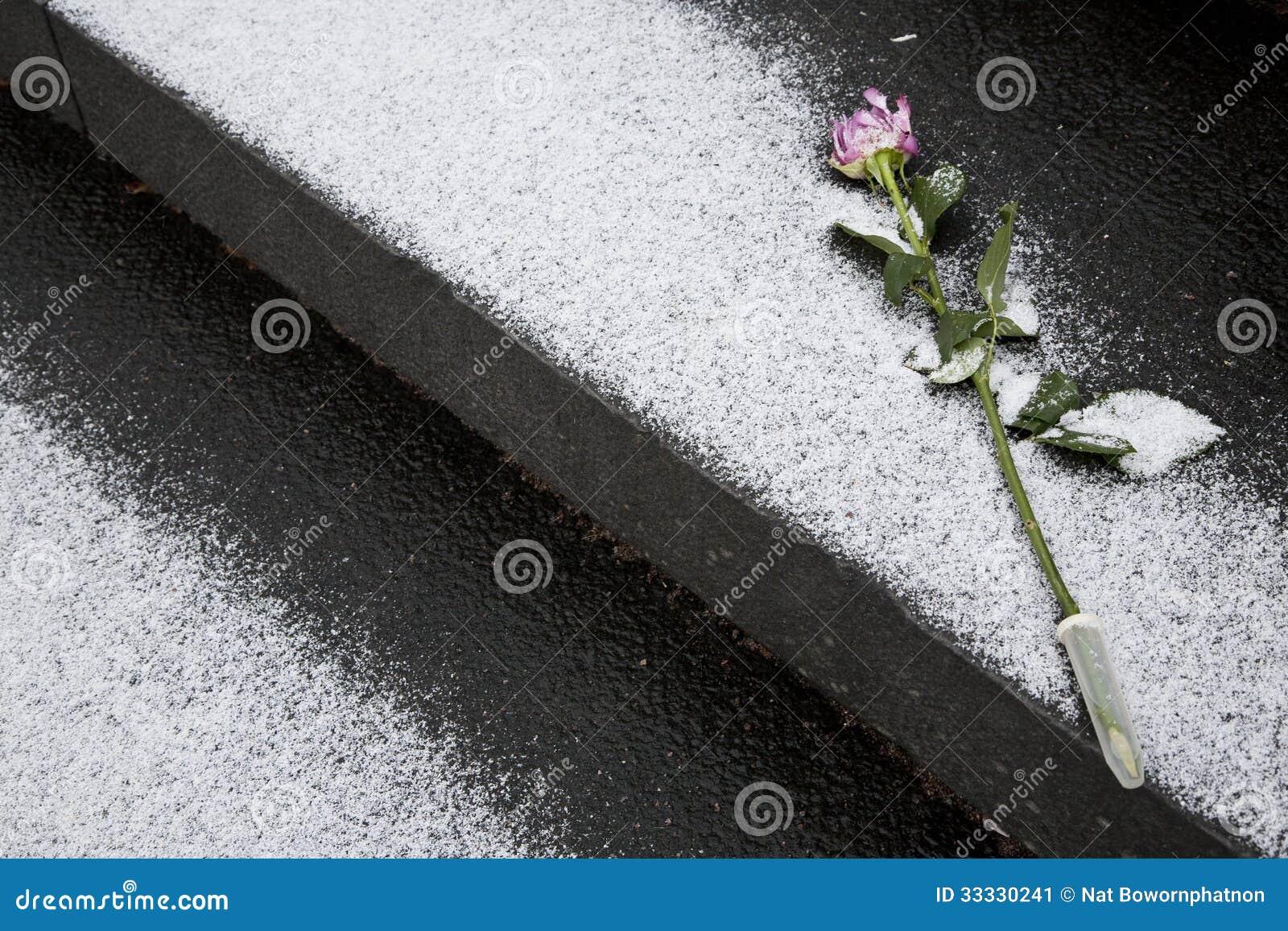 Rose pour la mémoire sur l enterrement