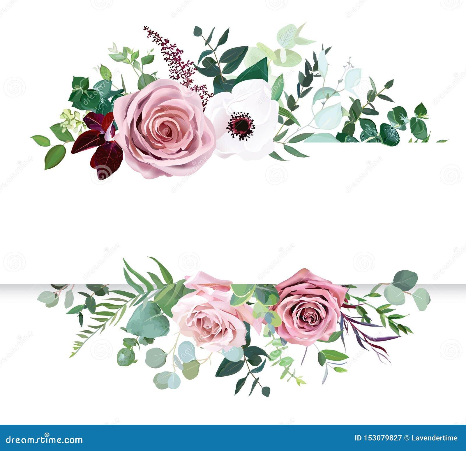 Rose rose poussiéreuse, fleurs pâles, bannière botanique horizontale de conception de vecteur d anémone blanche