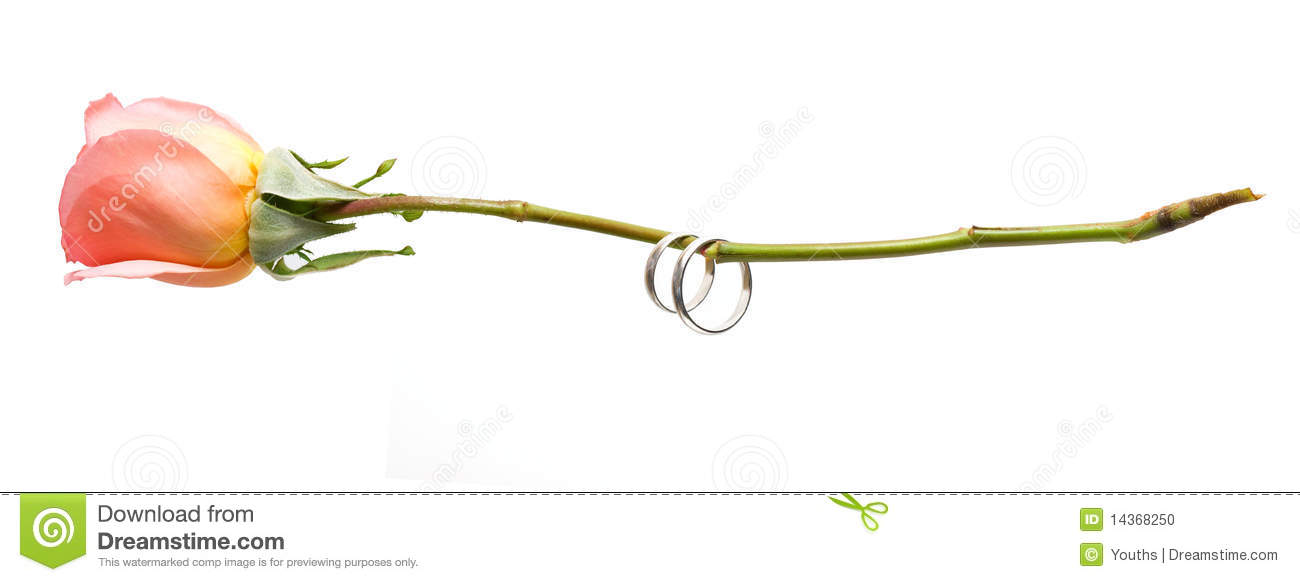 Rose and ring isolated on a white background