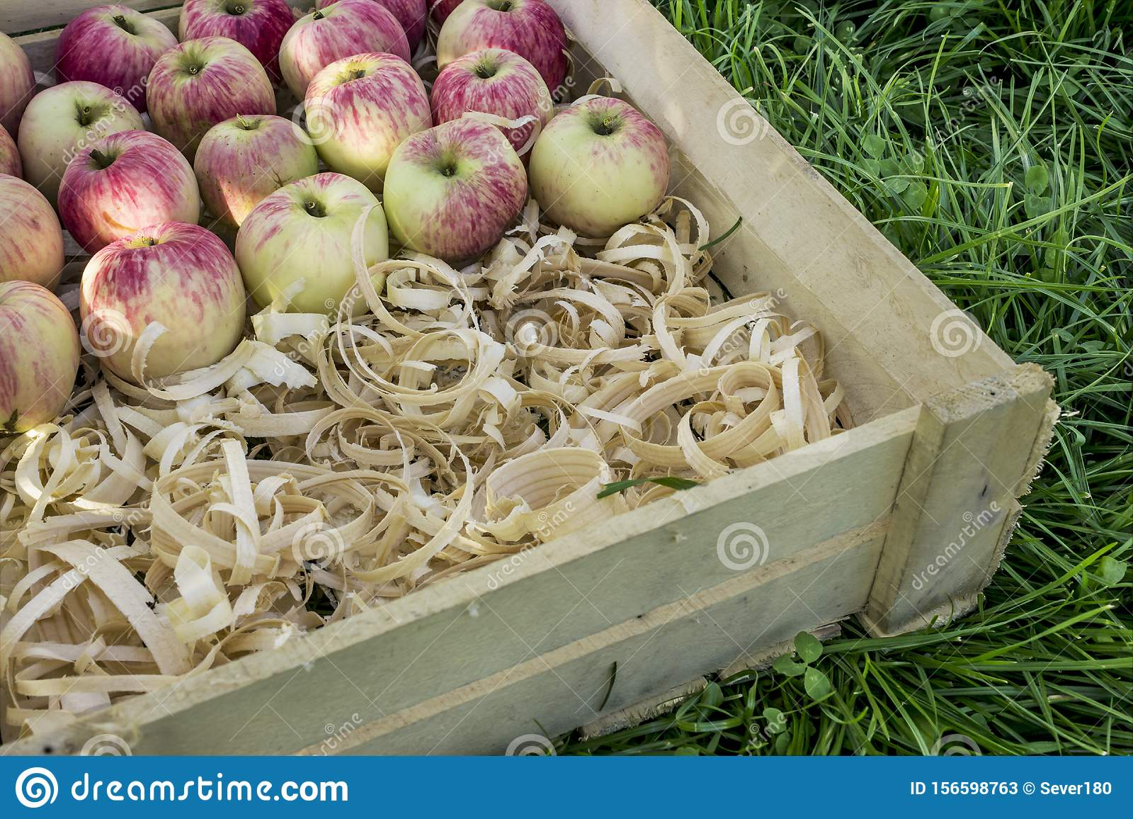 Rose ripe apples lie on shavings