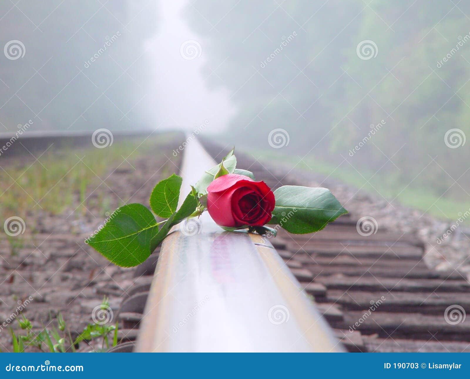 Rose roja en el ferrocarril