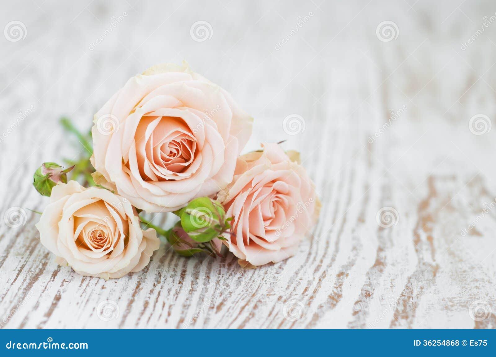 Rose rosa-chiaro