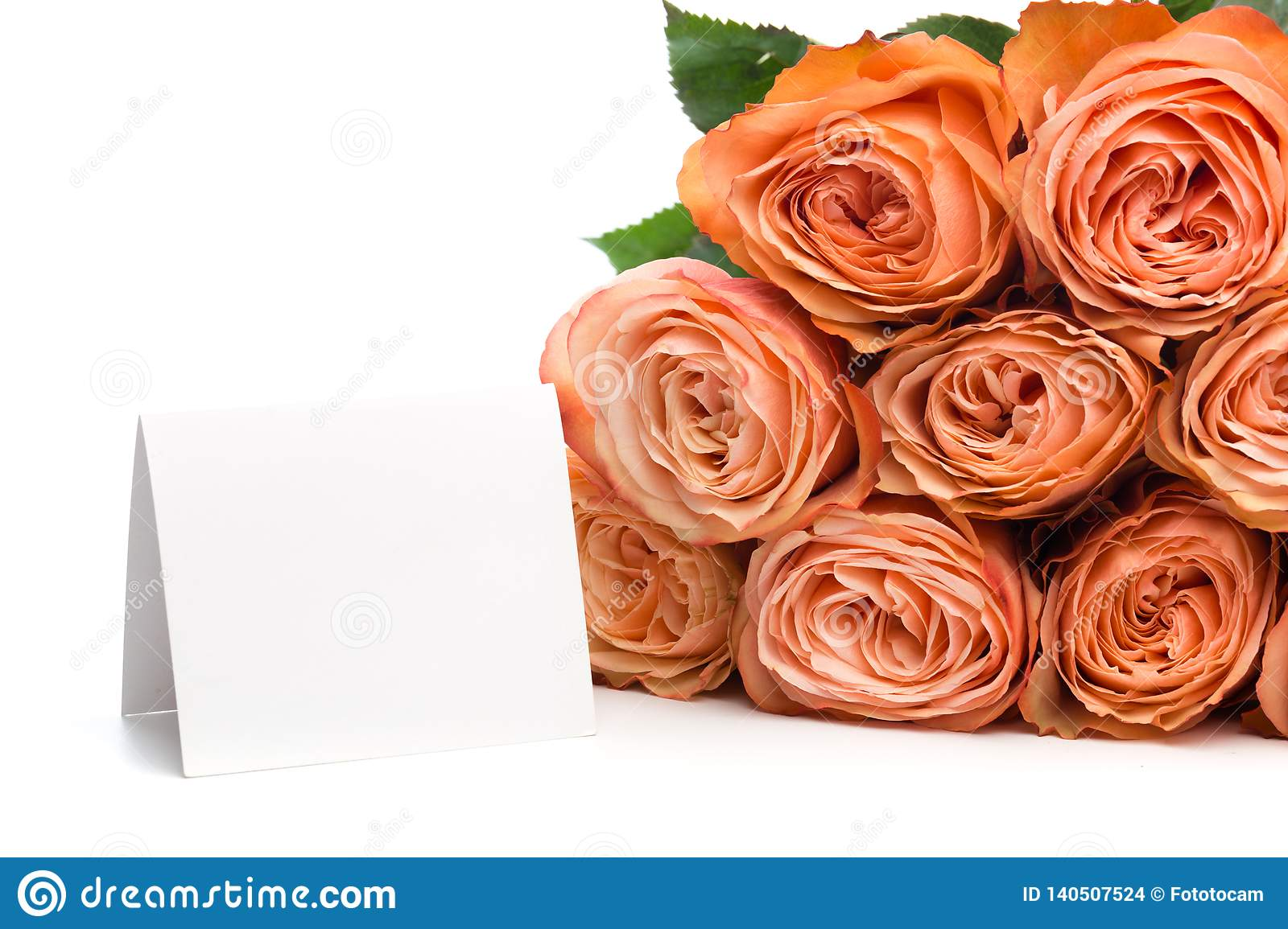 Rose roses with text place isolated on white background - Image