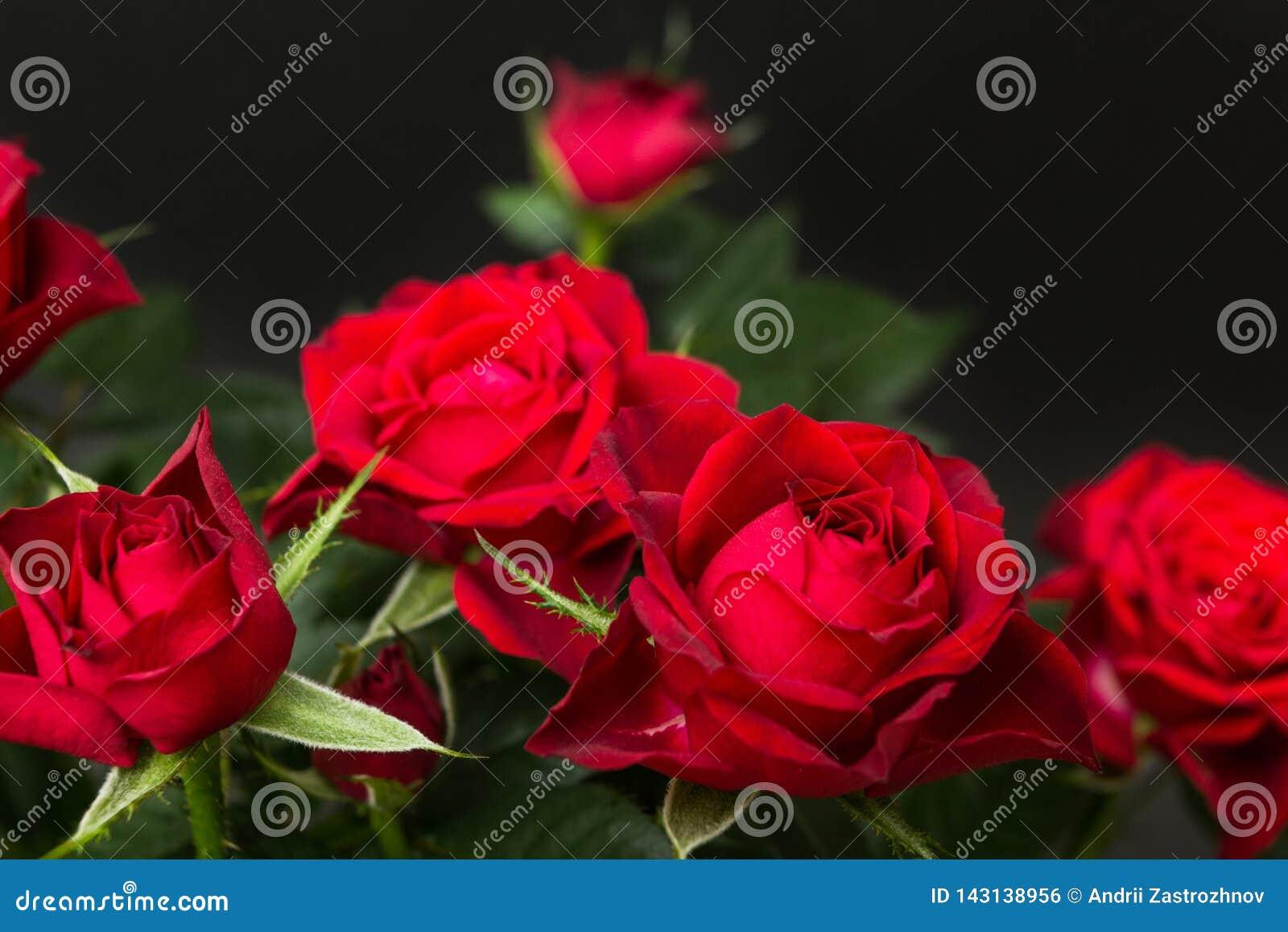 Rose rosse su un fondo nero