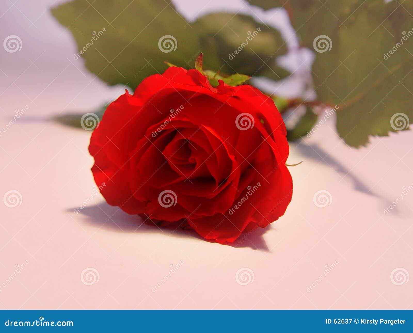 Download Rose rouge image stock. Image du romantique, fleur, rose - 62637