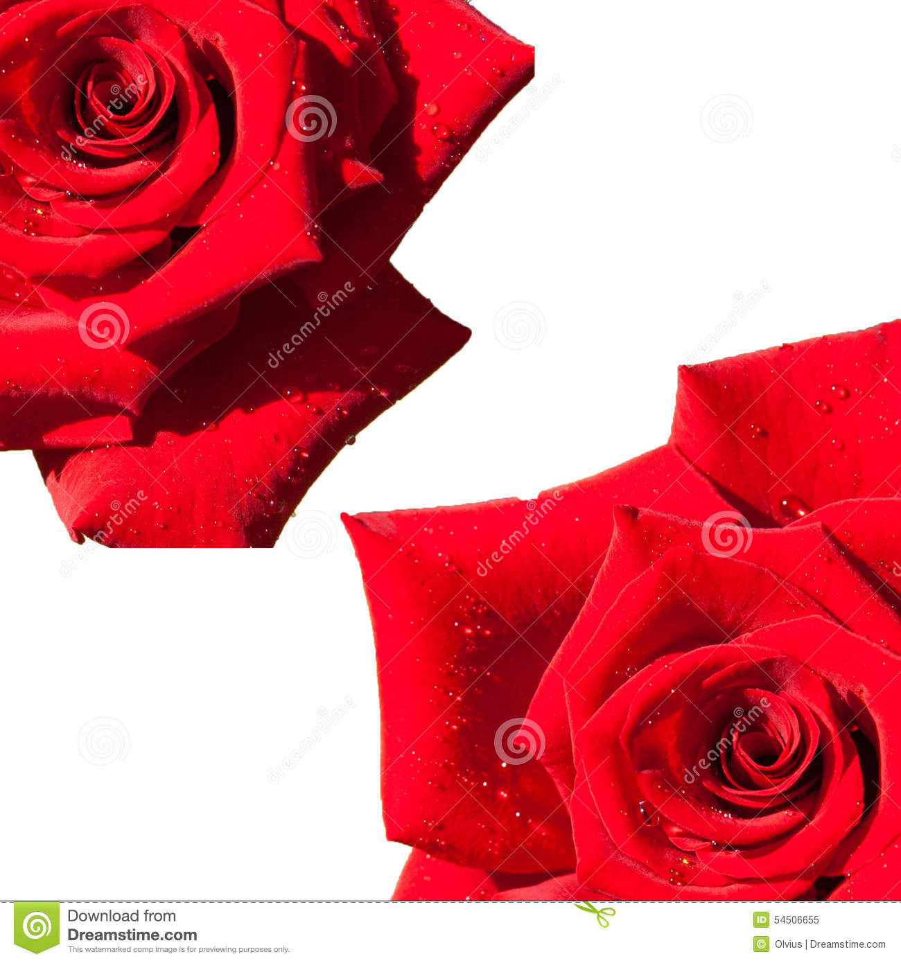 Rose rouge d isolement