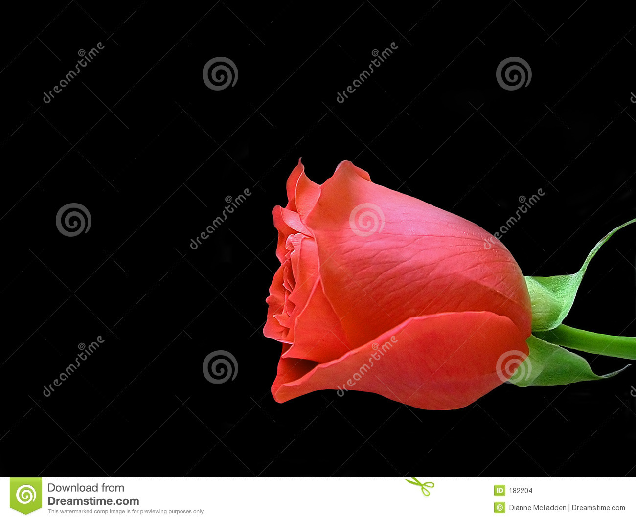 Rose rouge simple