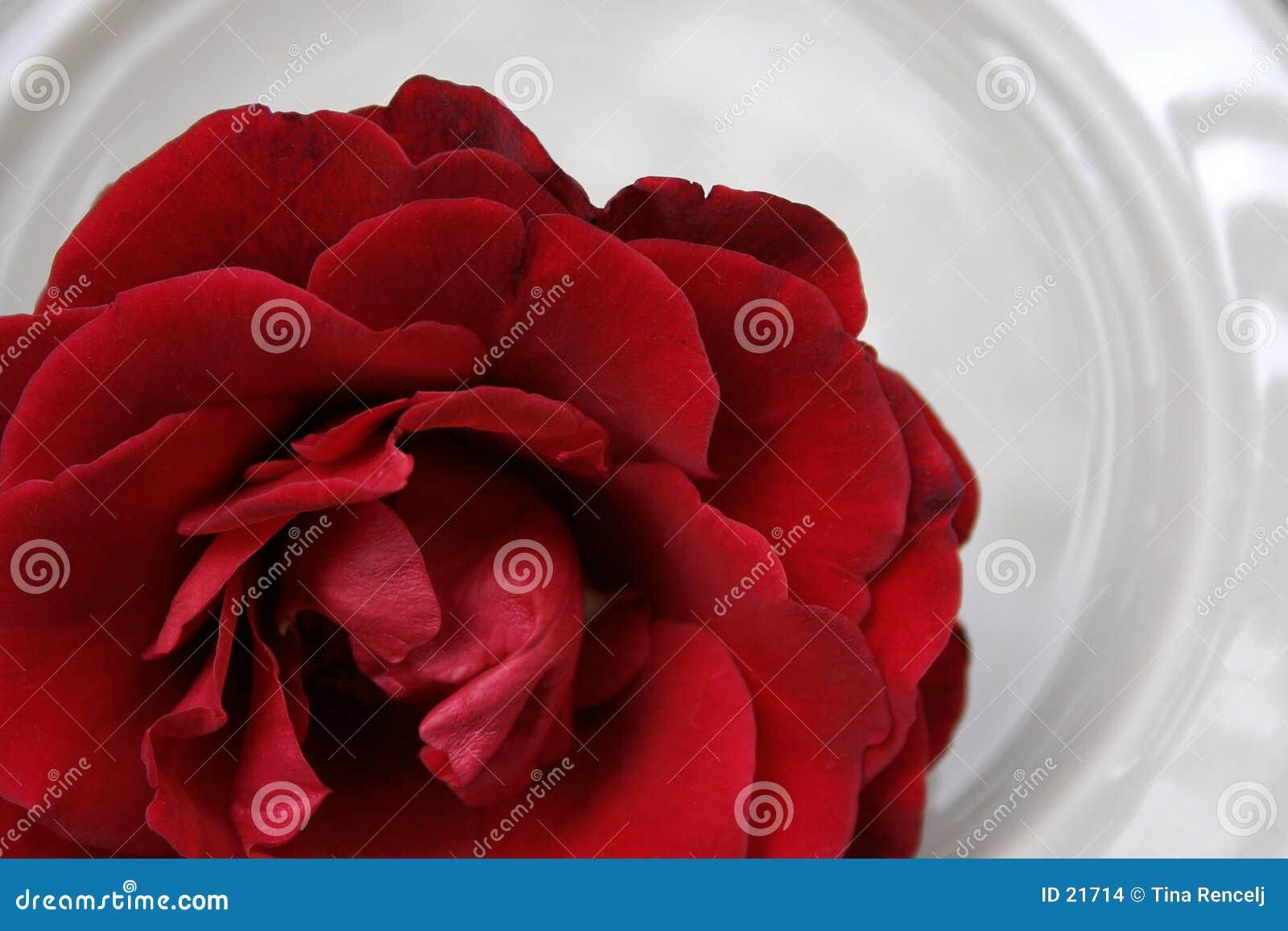 Rose rouge sur la porcelaine