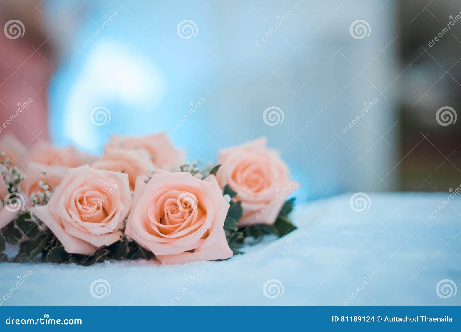 Rose setzte auf den Schreibtisch