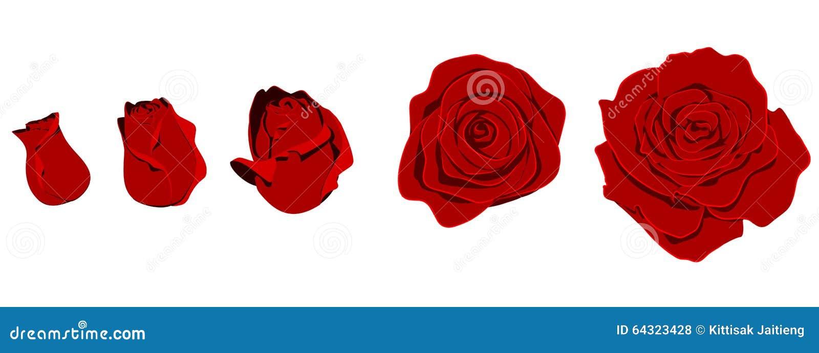 rose shape stock vector illustration of bloom clear 64323428