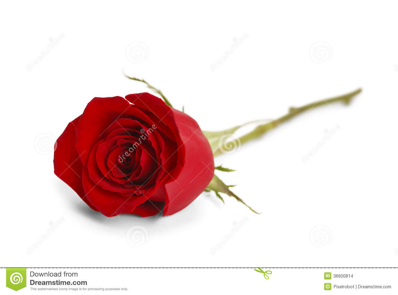 Single Rose Clipart: Rose Stock Images