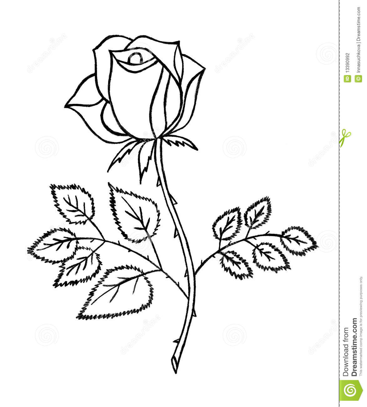 Rose Sketch Stock Photography Image 13390992