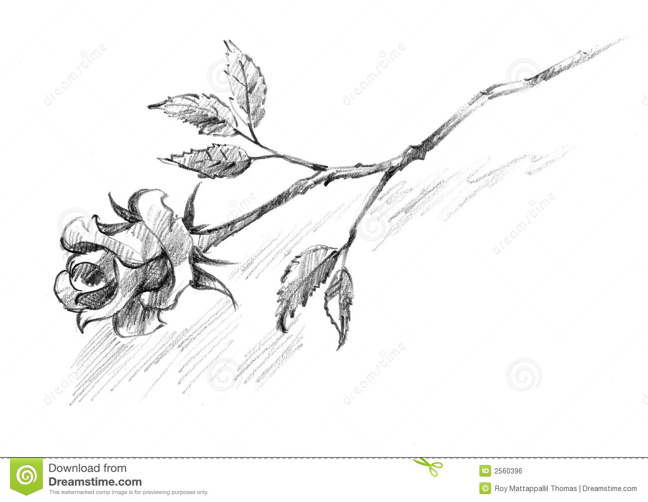 Rose Flower Pencil Drawing Stock Photos - Download 169 Images