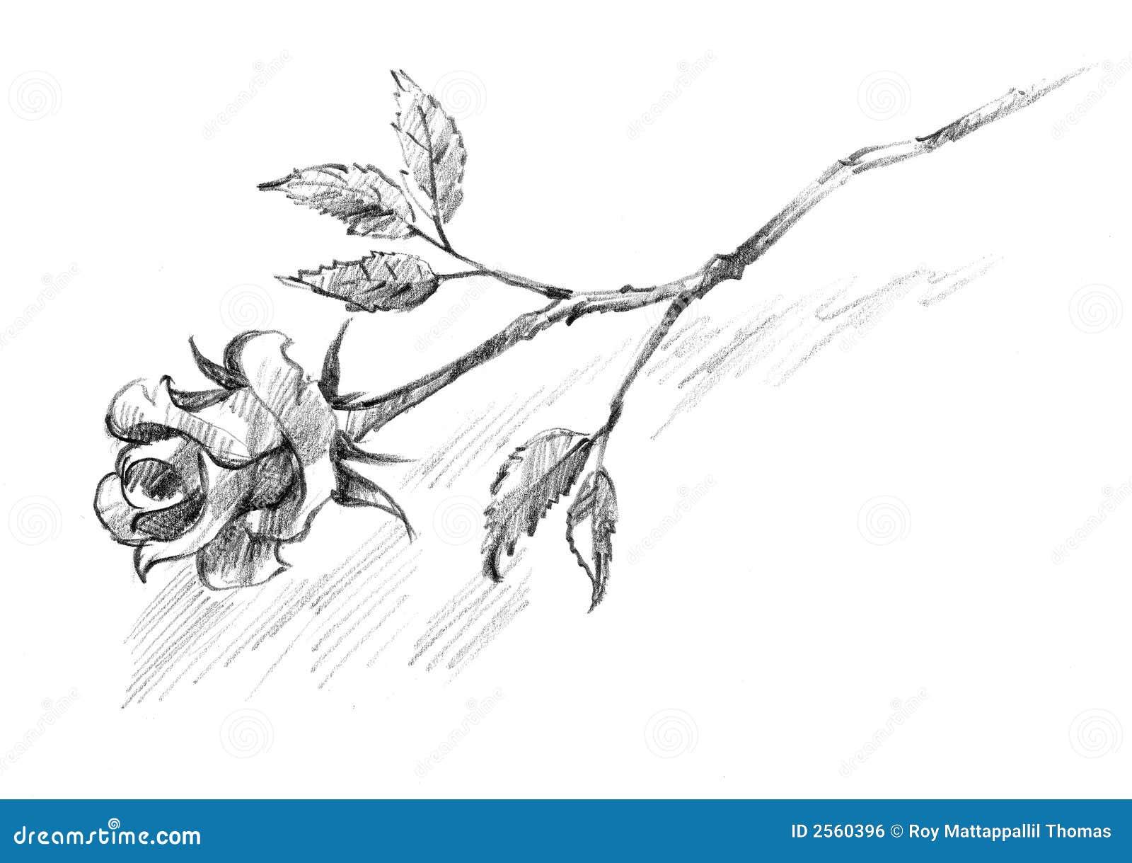 Single Black Rose Drawings