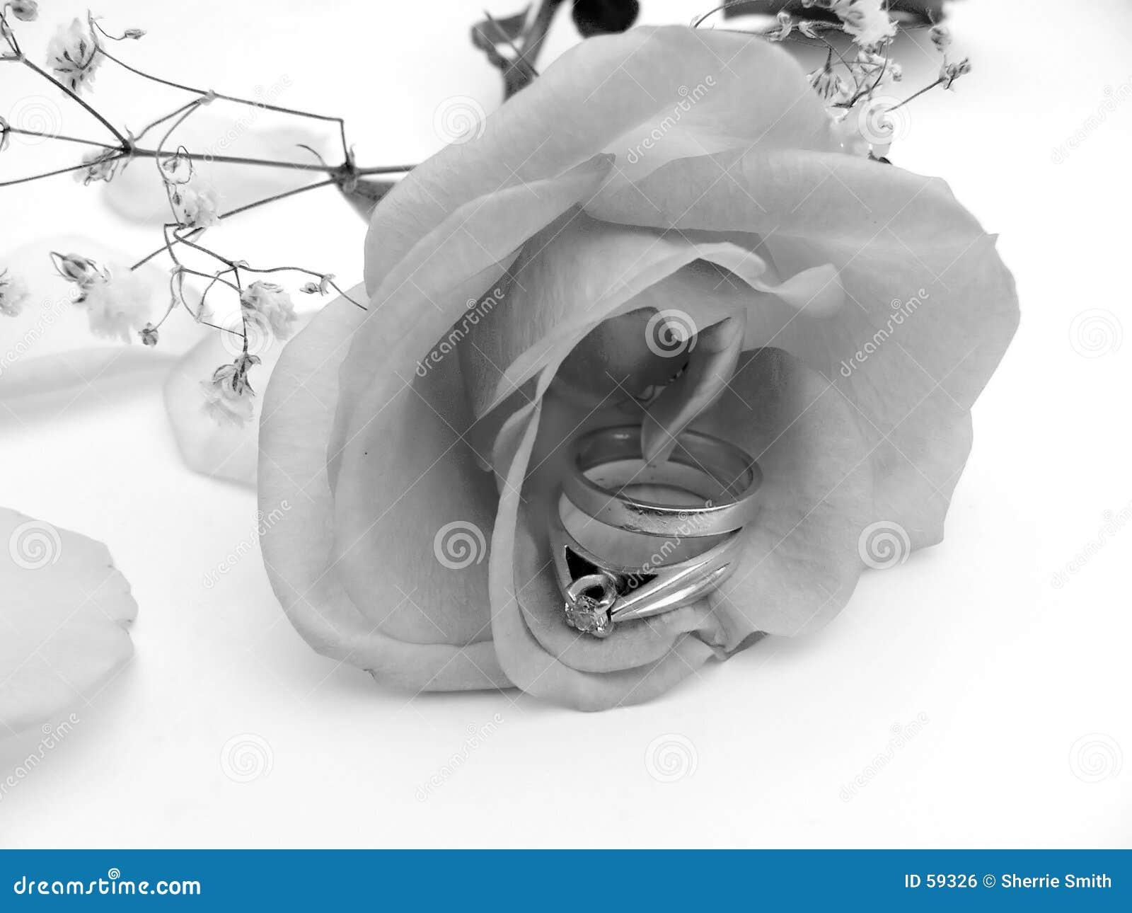 Rose srebra