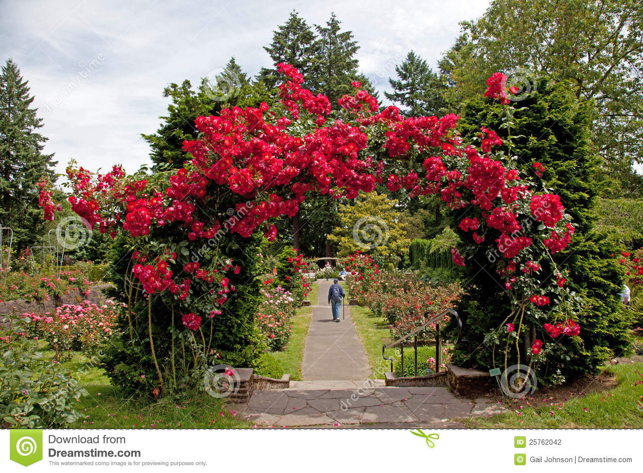 The rose test garden in Portland city the capital of Oregon State USA ...