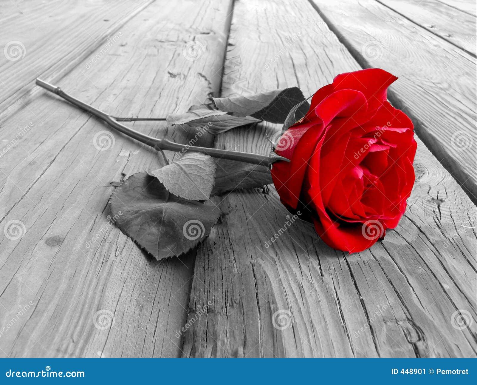 Rose trä för bw
