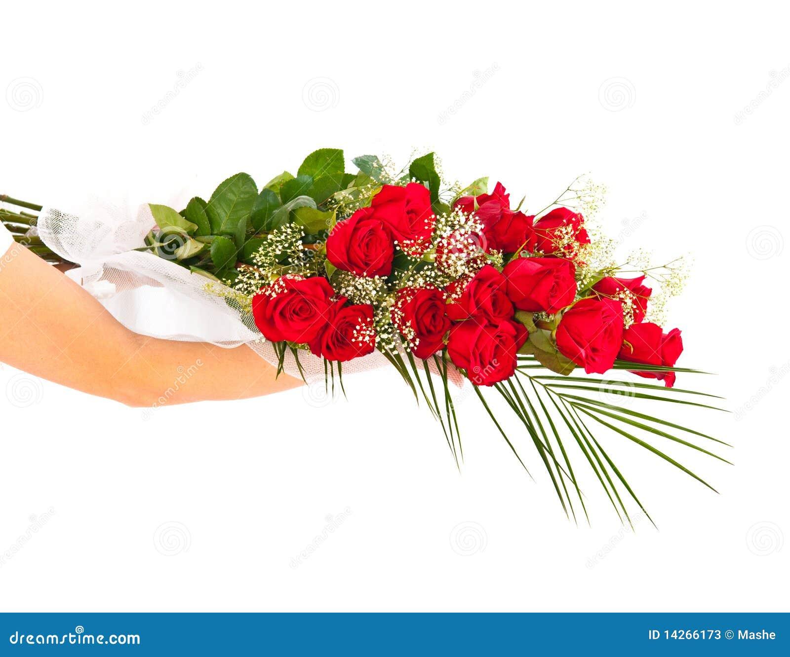 Rose trennte auf weißem Hintergrund