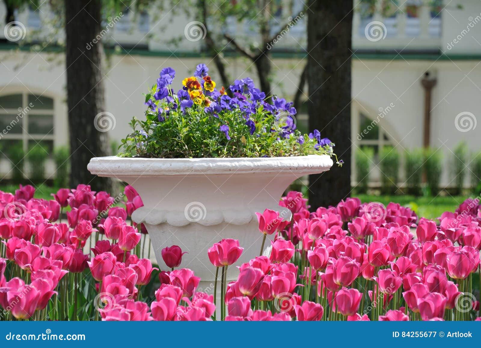 Rose Tulips Around vive le grand pot de pensées