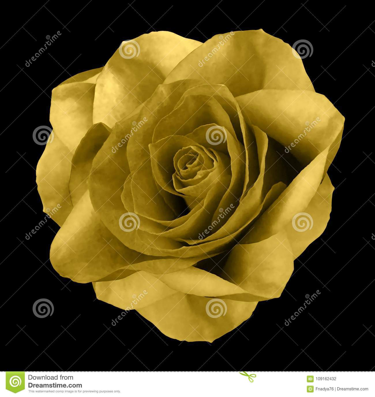 Rose Yellow Flower On The Black Isolated Background With Clipping