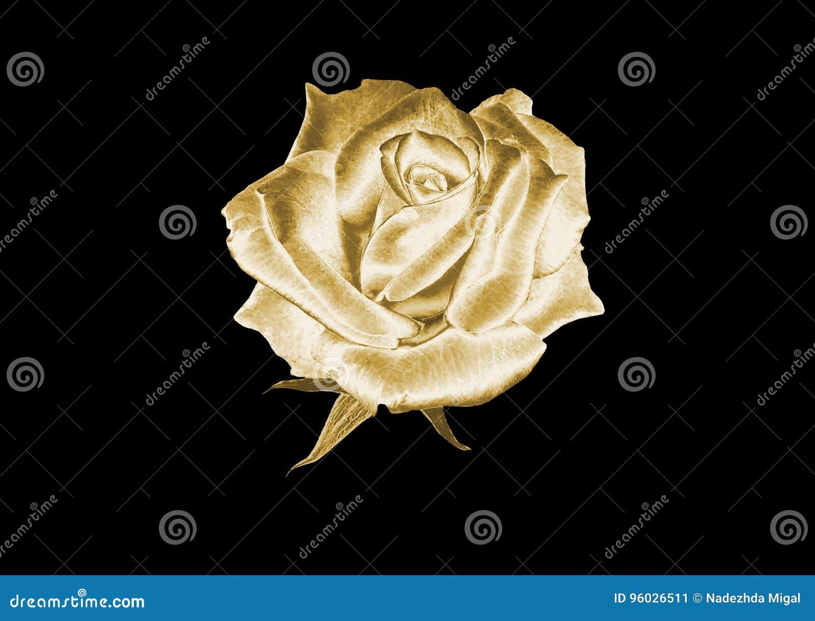 Rose złota
