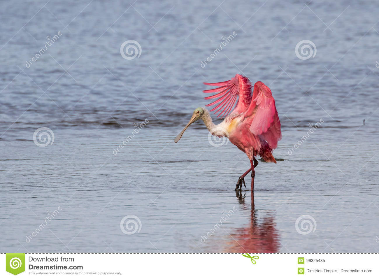 Roseate Spoonbill, J.N. Ding Darling National Wildlife Refug