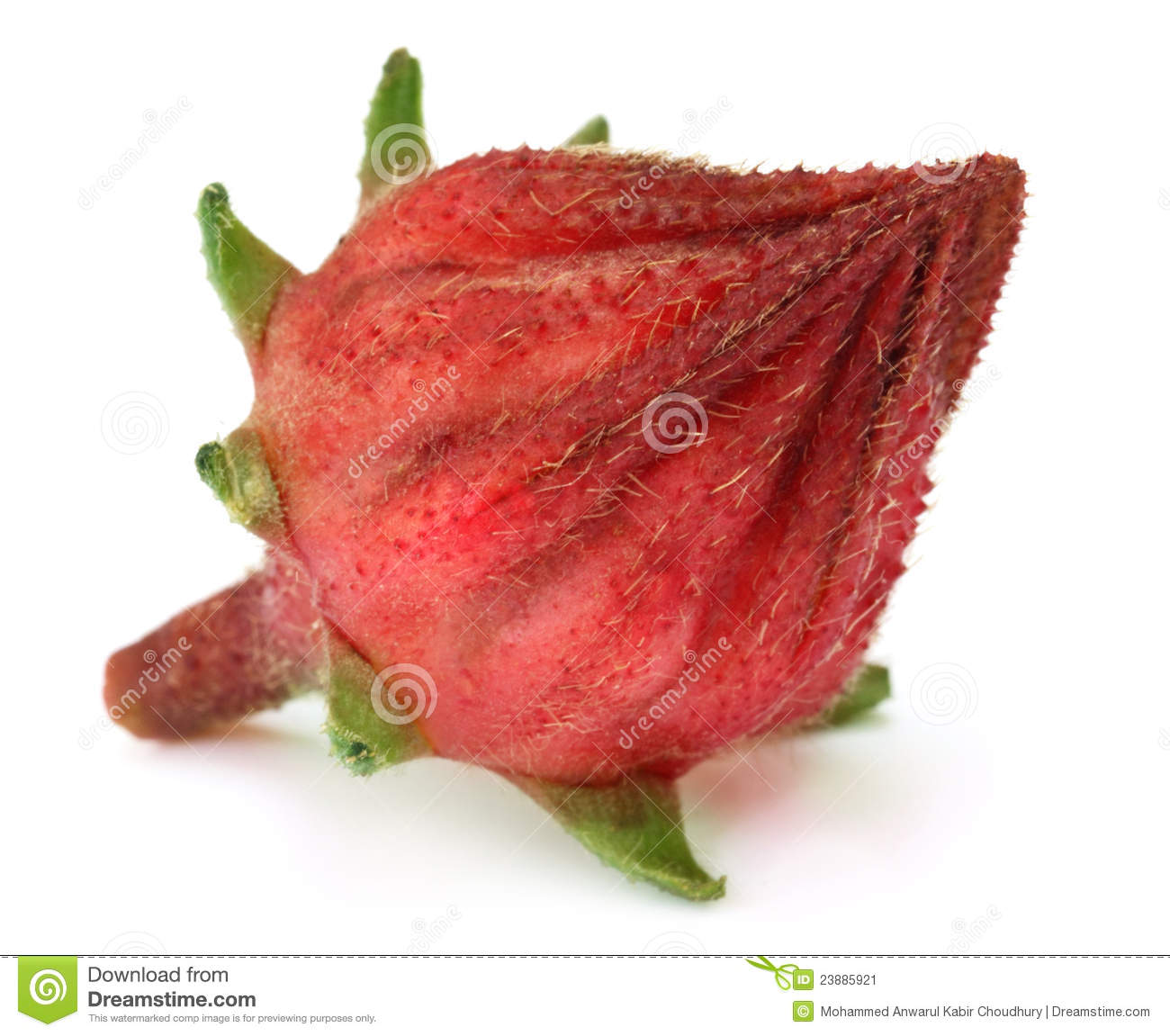 Red Roselle Fruit Royalty-Free Stock Photo