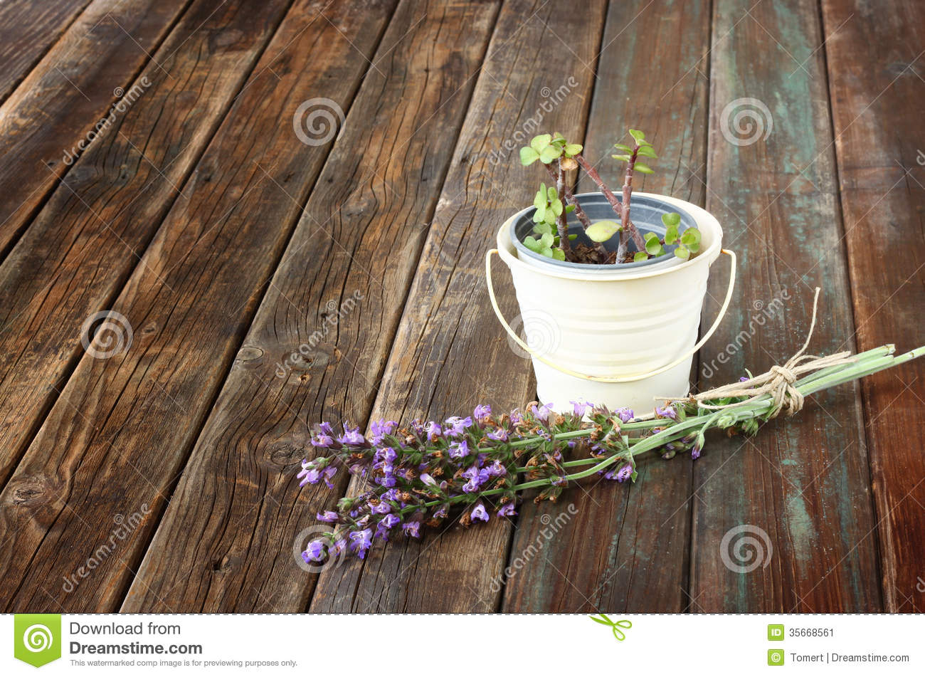 Rosemary and geranium plant on wooden table