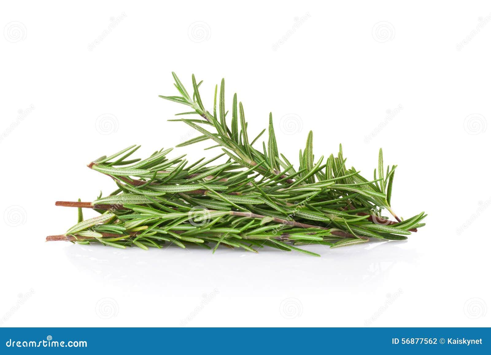 Rosemary ha isolato su priorità bassa bianca