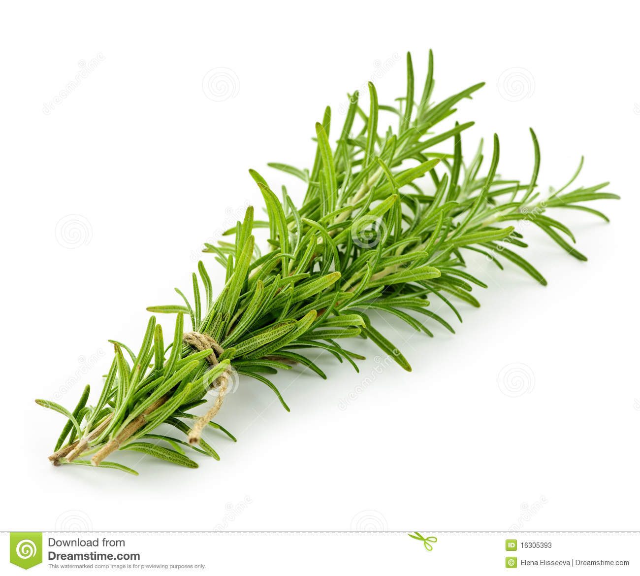 Rosemary sprigs tied in bundle isolated on white background.