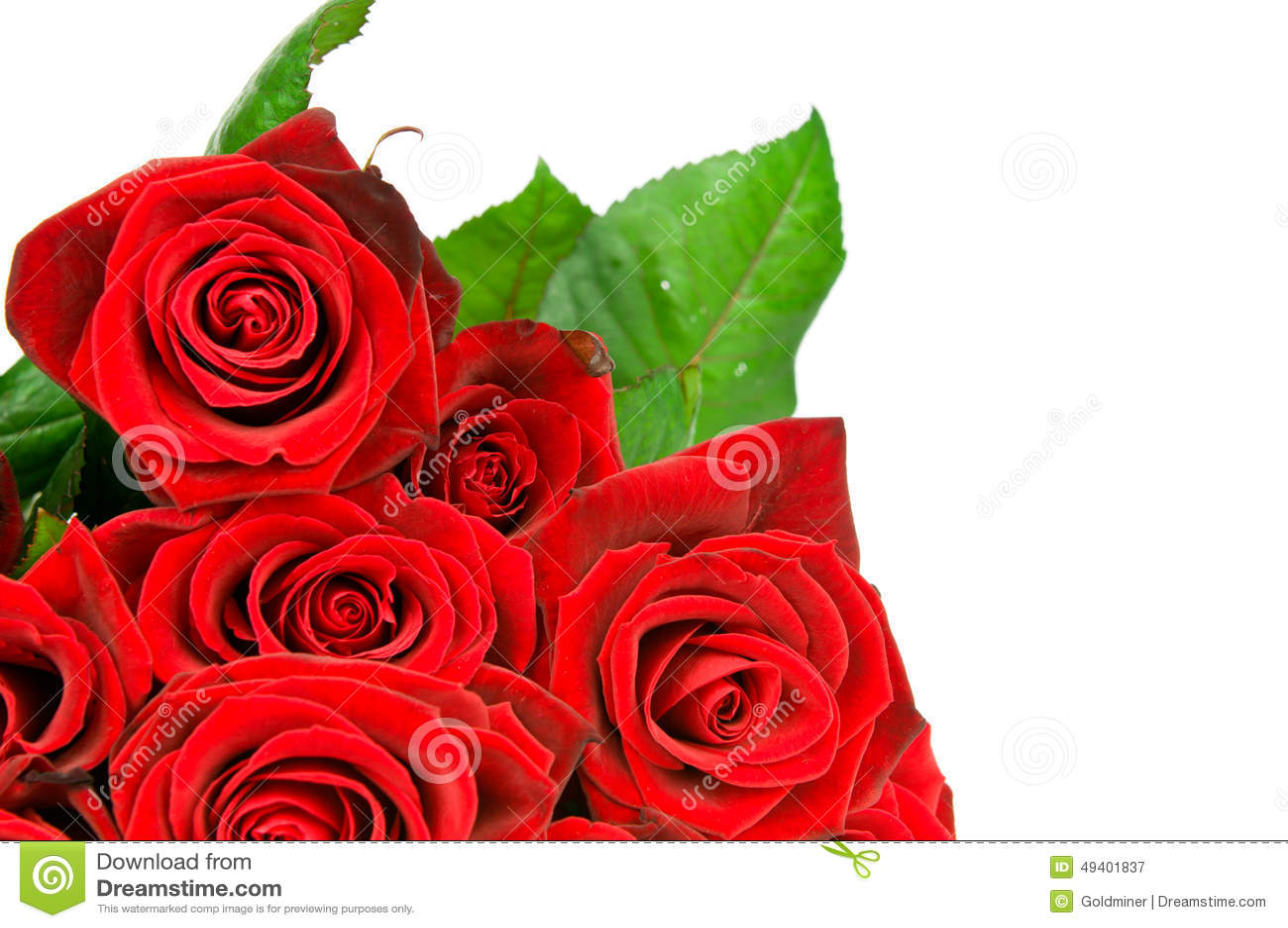 Download Rosen Auf Weißem Hintergrund Stockbild - Bild von dekoration, bunt: 49401837