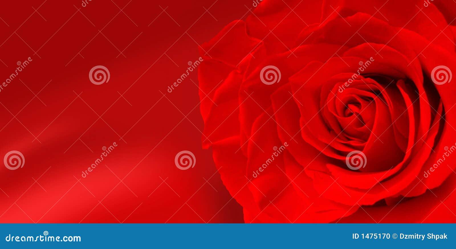 Rosen-Blumen