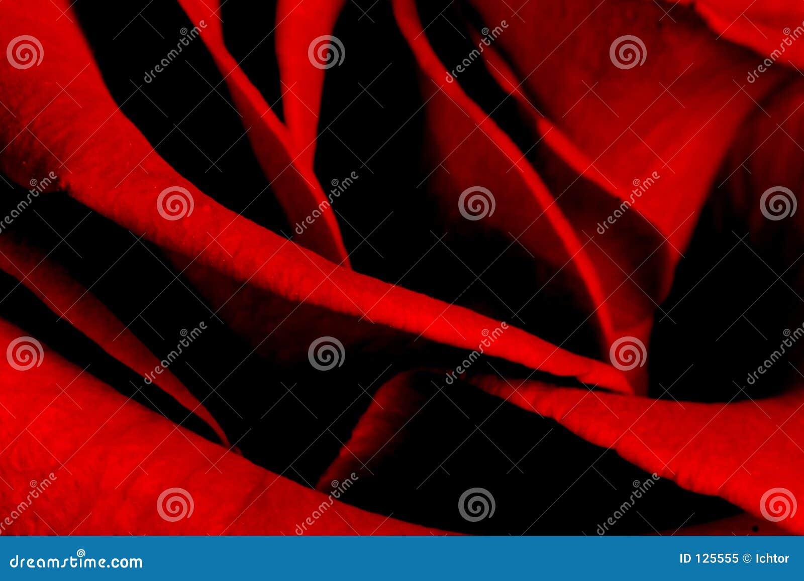 Rosen-Blumenblätter