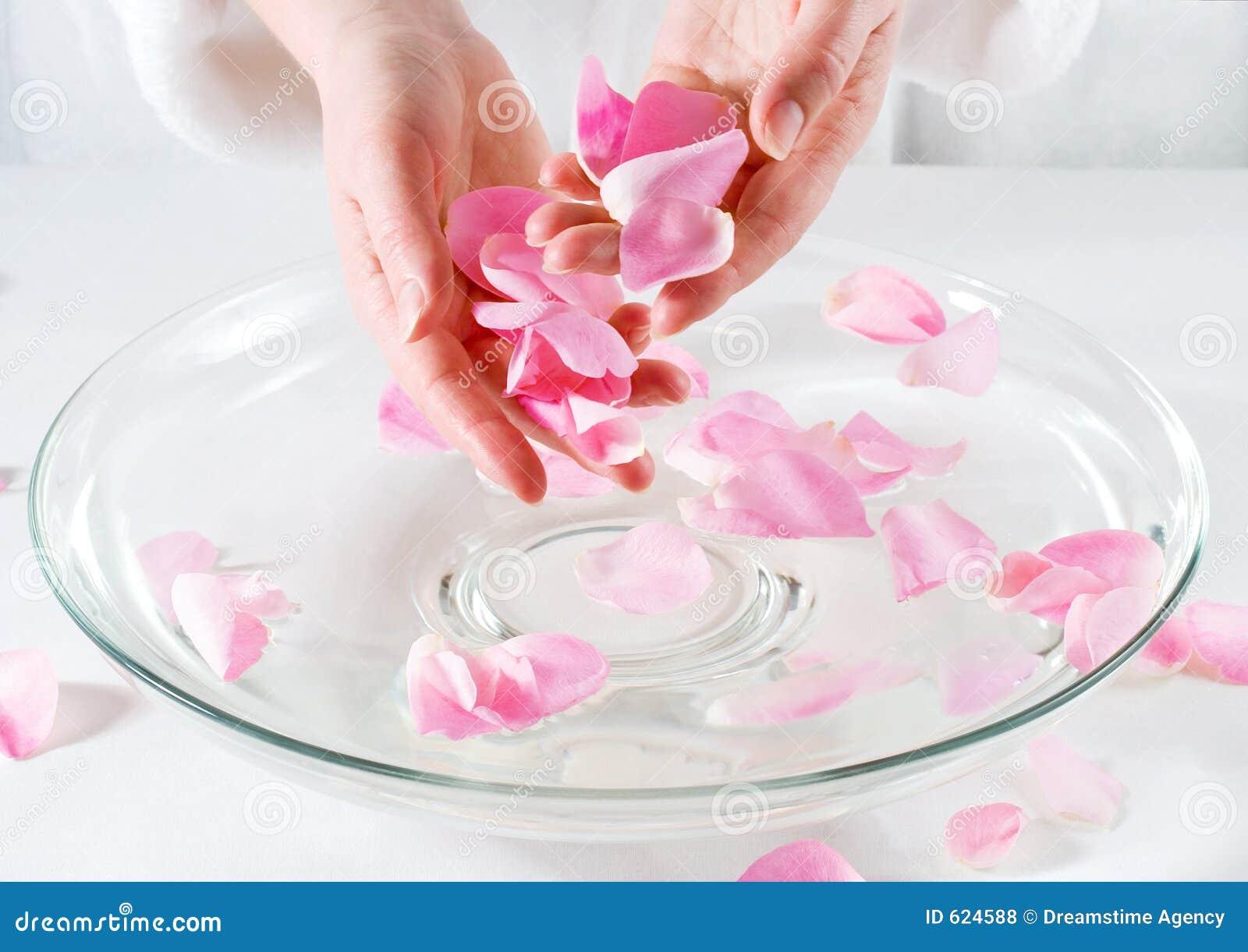 Rosen-Blumenblatt-Badekurort