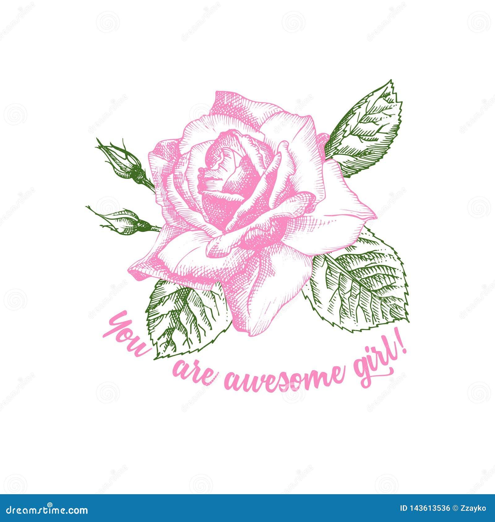 Wei Farbe: Rosen-Blumenskizze, Wenn Art Auf Wei?em Hintergrund
