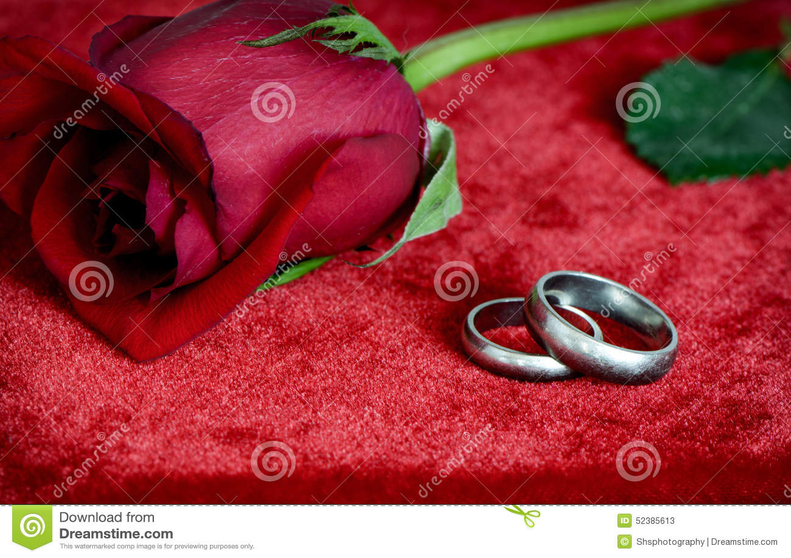Rosen Und Silberhochzeit Ringe Stockbild Bild Von Liebe