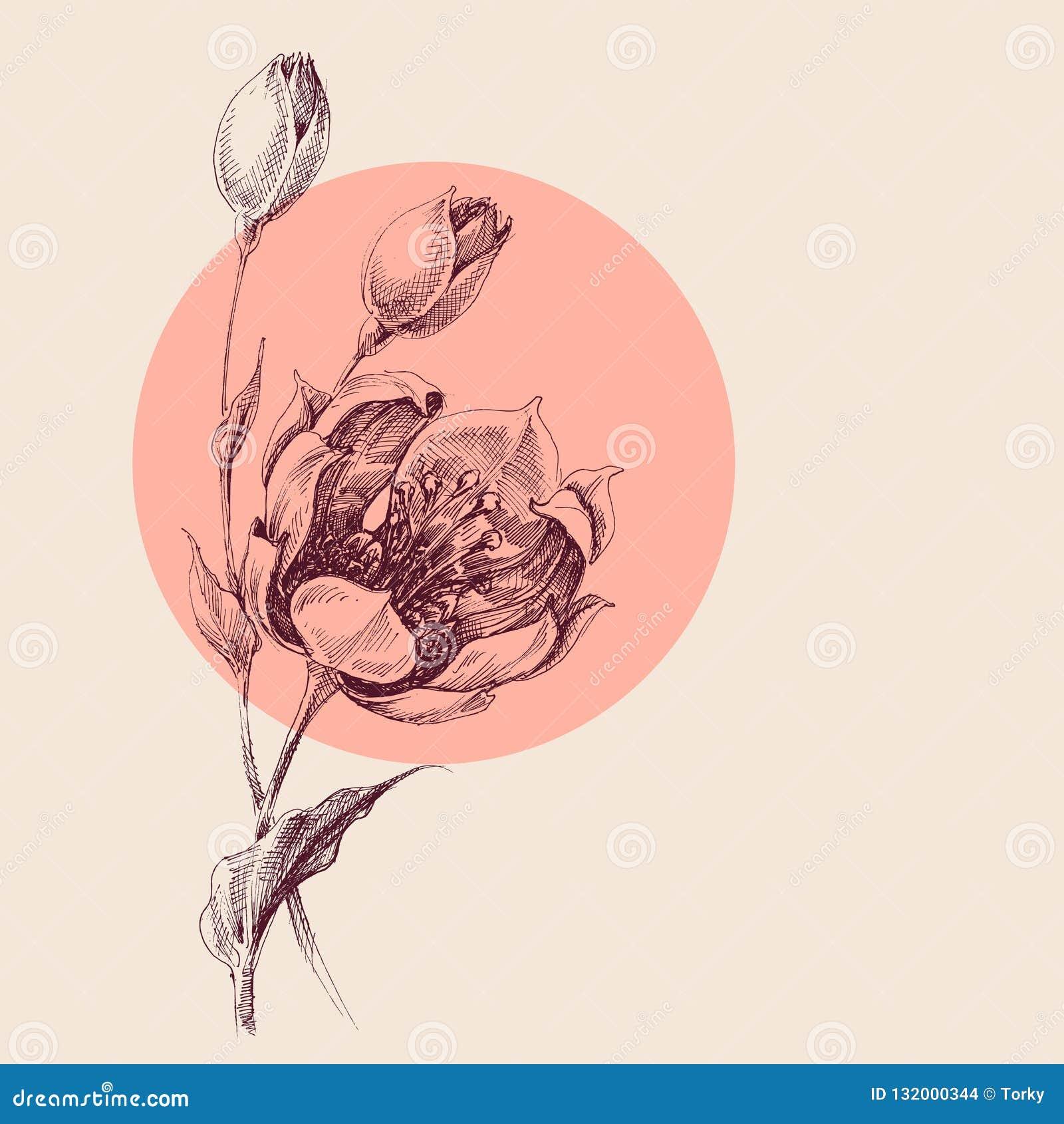 Rosenblumenstrauß-Handzeichnung