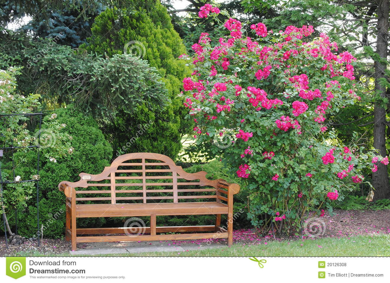 rosenbusch und eine garten bank lizenzfreie stockfotos. Black Bedroom Furniture Sets. Home Design Ideas