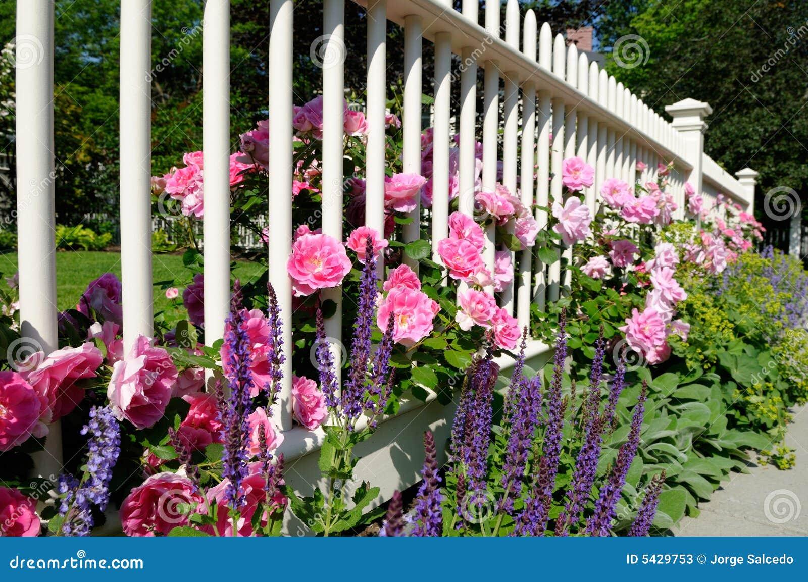 fences rose essay