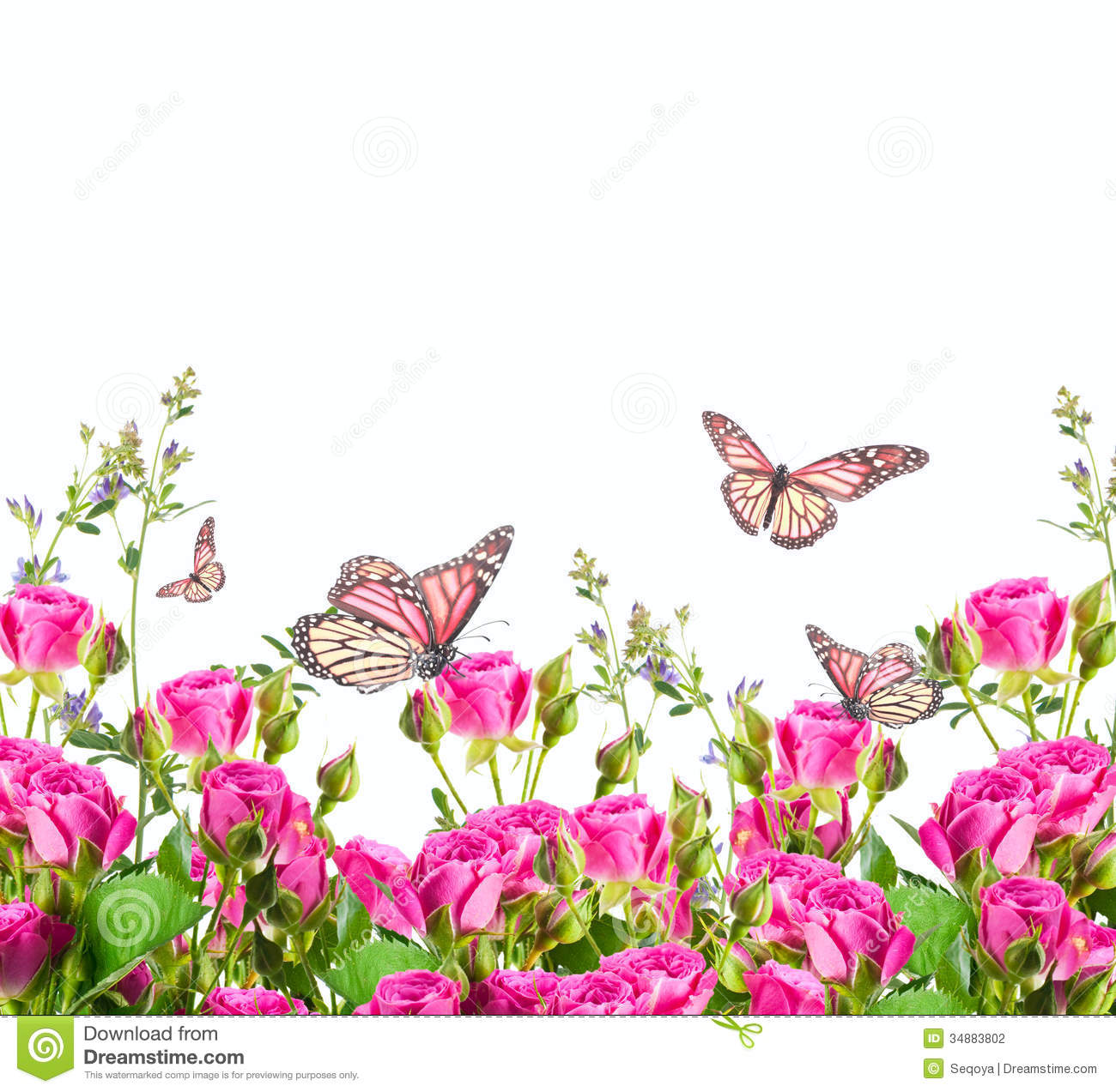 Roses And Butterfly Floral Background Stock Photo Image