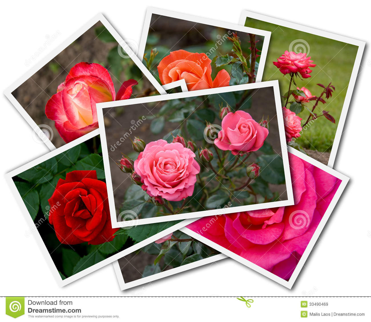 Download Roses Collage stock image. Image of card, pile, print - 33490469