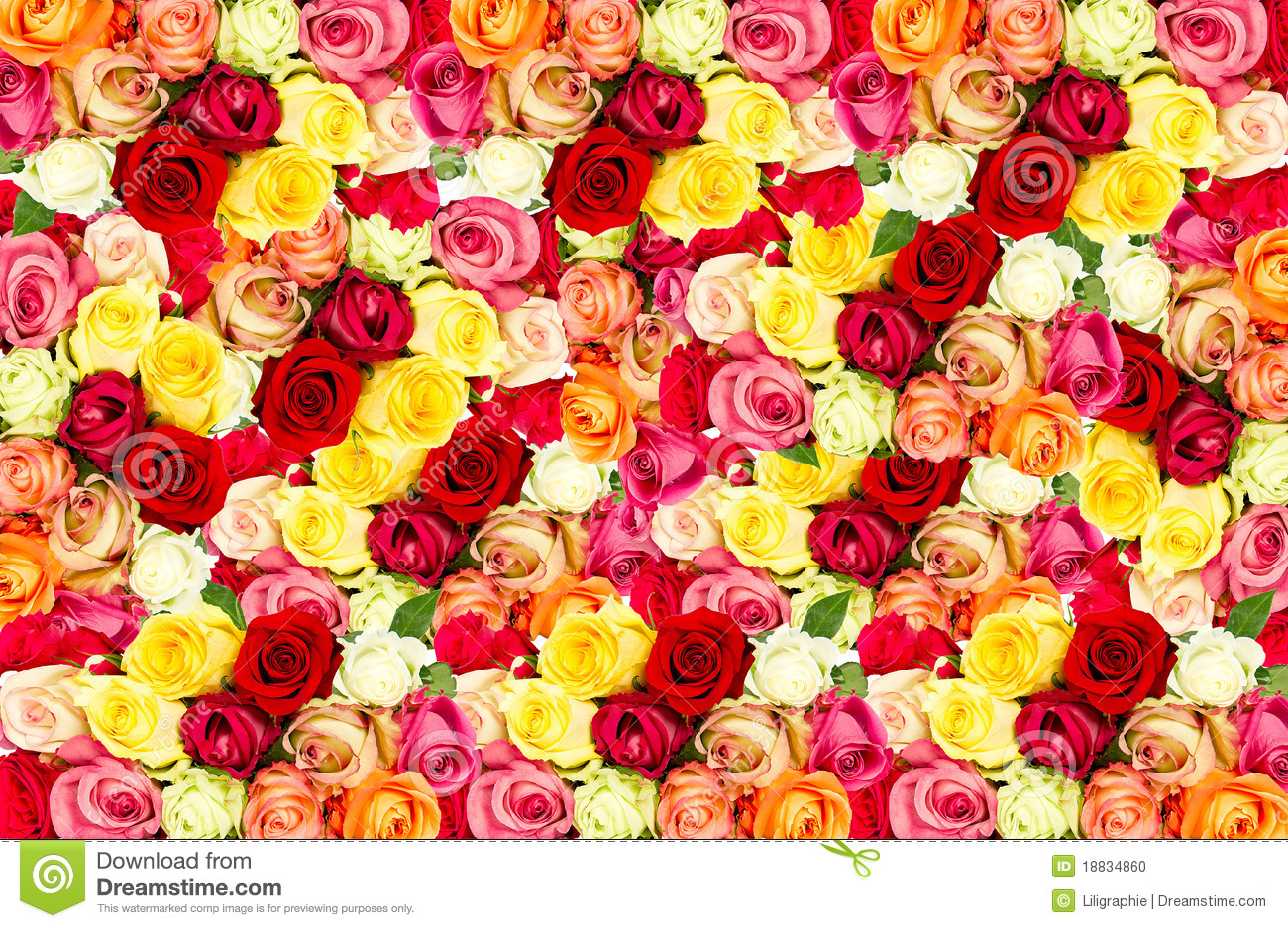 Roses colorful flowers frame stock photo image 18834860 for Pics of colourful roses