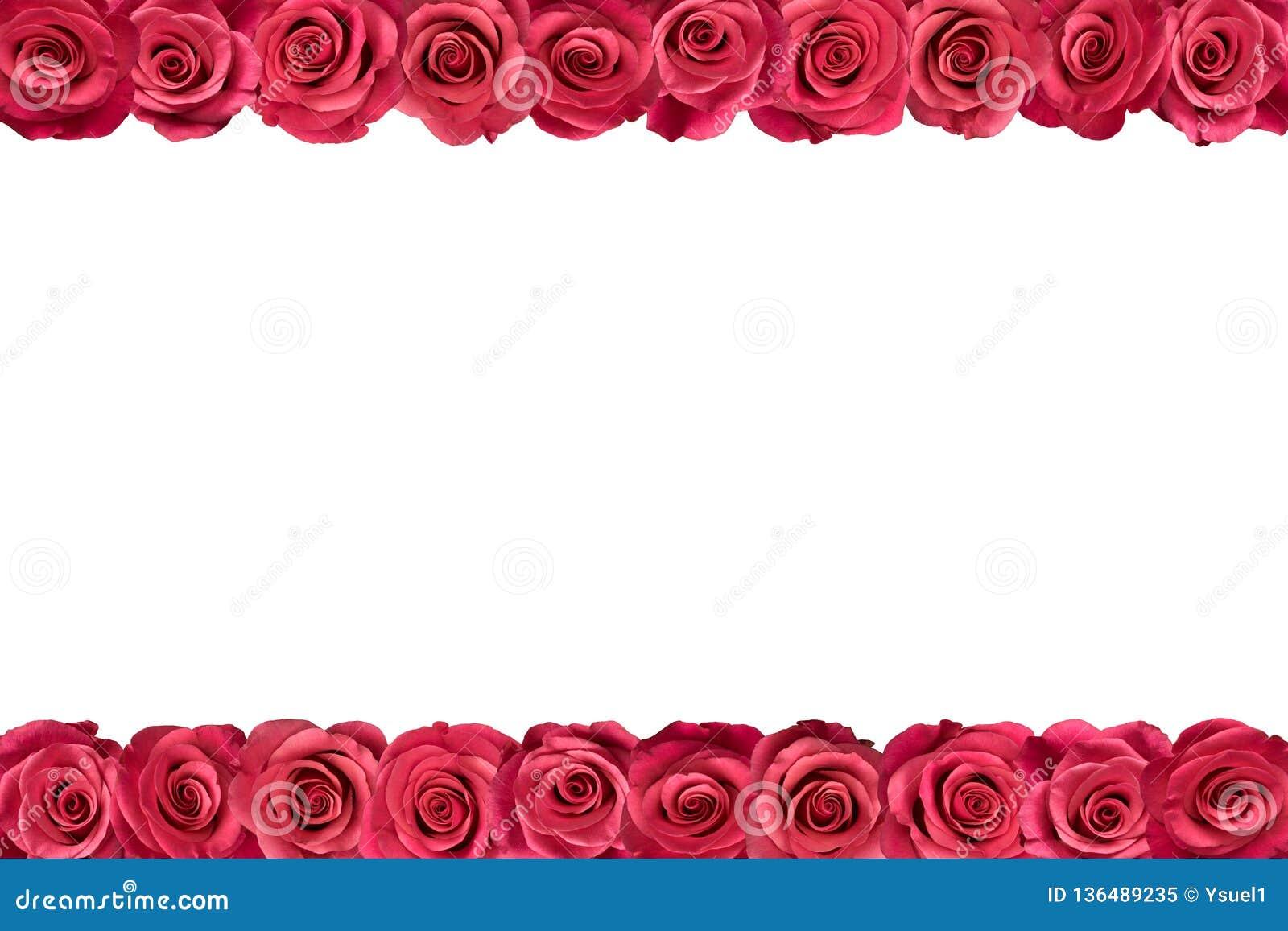 Roses roses dans les rangées 2
