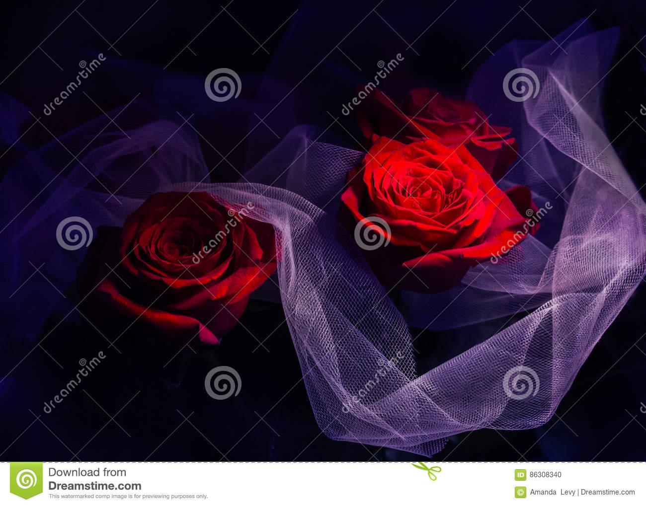 Roses on a dark dramatic background