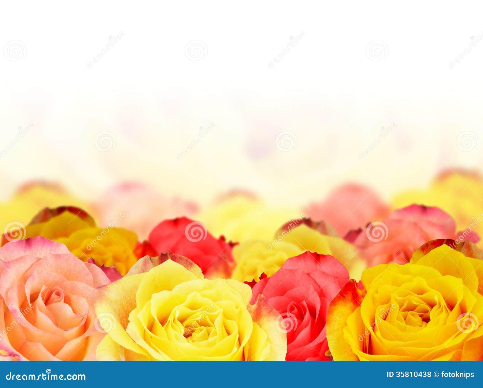 Roses de papier peint