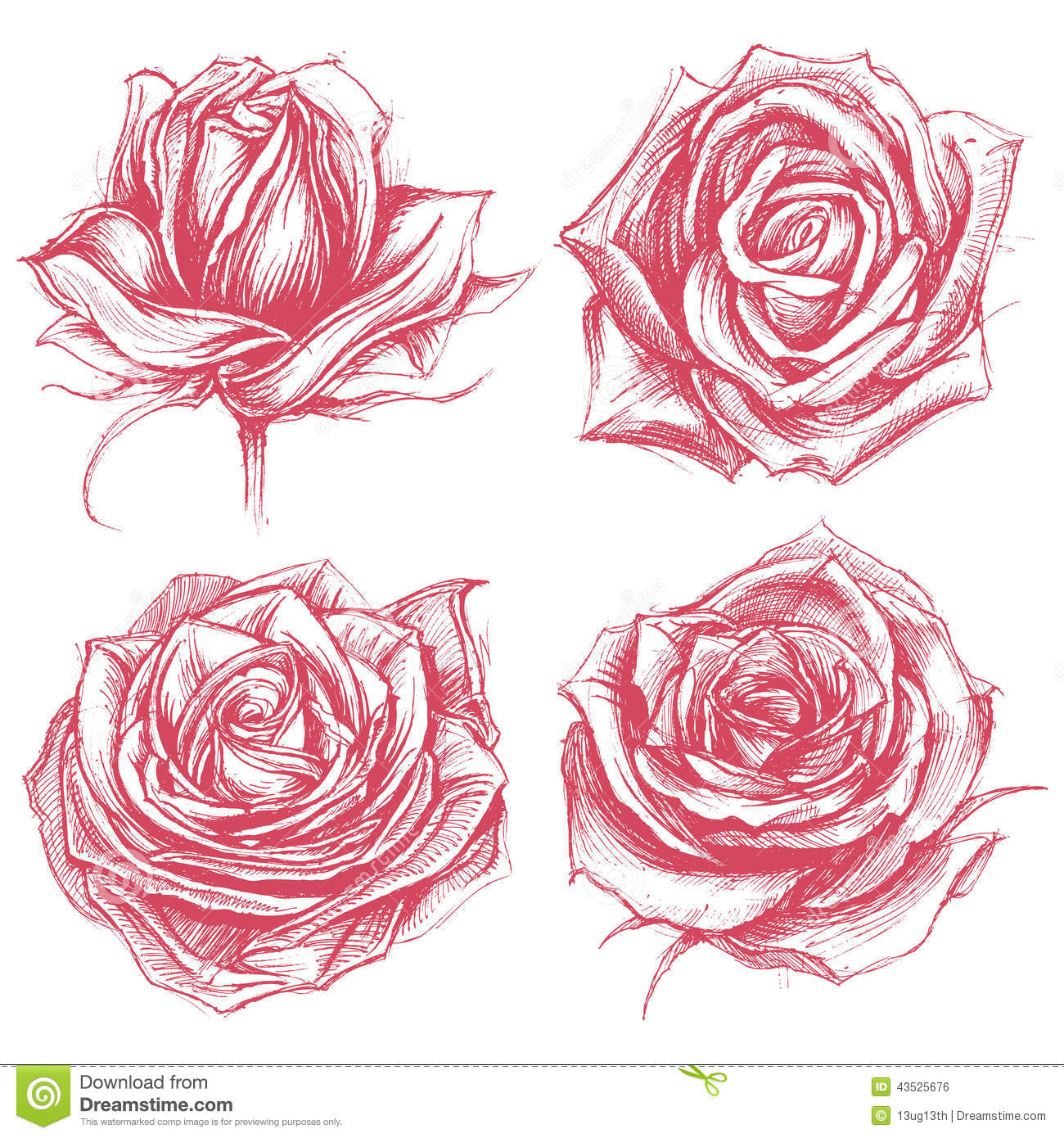 Drawing Lines Using Svg : Roses drawing set stock vector image
