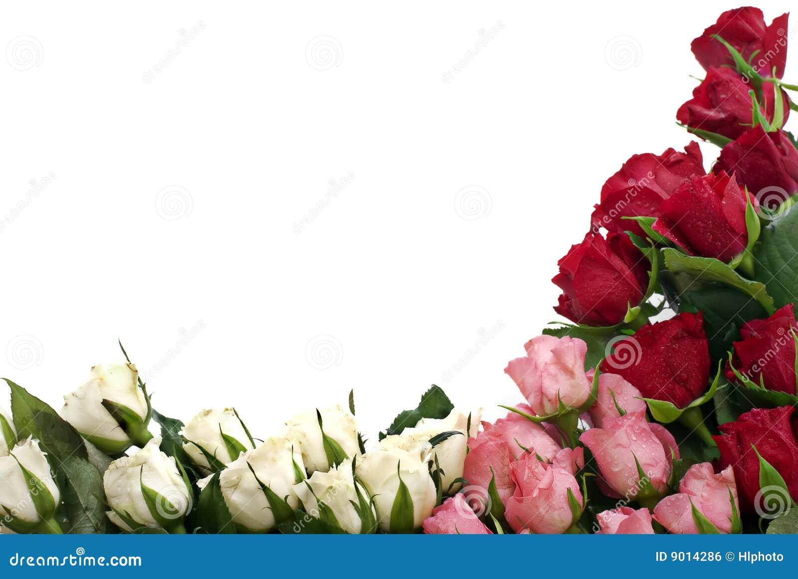 Roses faisantes le coin